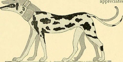 """Image from page 27 of """"The new book of the dog : a comprehensive natural history of British dogs and their foreign relatives, with chapters on law, breeding, kennel management, and veterinary treatment"""" (1911)"""