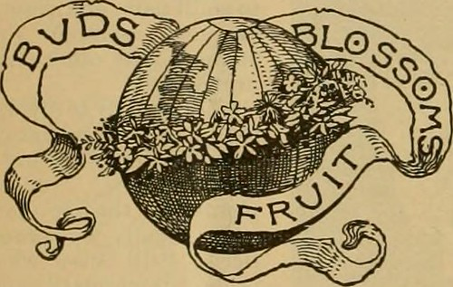 """Image from page 41 of """"Popular gardening and fruit growing; An illustrated periodical devoted to horticulture in all its branches"""" (1885)"""