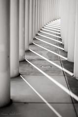 Arriving (Haf3z) Tags: diminishinglines luxembourg europe blackandwhite bw grey minimalism minimalizm pillars columns city summer europa museum philharmonieluxembourg 1placedeleurope1499luxembourg nikon nikond90 shadows sun sunshine raysofthesun urban urbanfragments cityphotography streetphotography emptystreets street