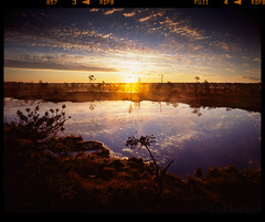 Prehistoric Sunrise (tsiklonaut) Tags: pentax 67 6x7 67ii film analog analogue analogica analoog 120 roll medium format keskformaat fuji fujifilm provia 100f sunrise sunset sun päikesetõus päike raba soo maastik landscape wetland swamp lake reflection peegeldus vesi water prehistoric minimalistic mänd color slide dia positive e6 chrome hunt 6x sky clouds pattern pine tree travel discover experience estonia estonian eesti hüpassaare soomaa rahvuspark national park protected area drum scan drumscan scanner pmt photomultipliertube ngc