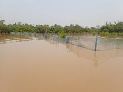 Net Fish Trap