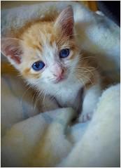 Mi mascota. (jomapebo1970) Tags: samsung galaxy s6 mascota gato cat