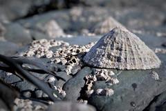 Rockpools (Late Breaks Devon) Tags: coastline rockpools rocks limpet limpets barnacles coast north devon seaweed late breaks