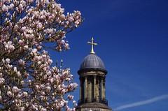 Blossom and cross (Sundornvic) Tags: church shrewsbury shropshire stchads town centre quarry park grass trees blue sky clouds light tower cross