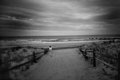 DR1-061-29 (David Swift Photography Thanks for 21 million view) Tags: davidswiftphotography newjersey oceancity dunes dunegrass beaches ocean atlanticocean seashore alone 35mm film lomography yashicat4