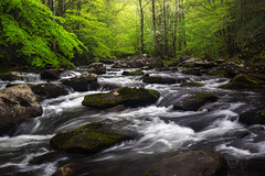 Turning the corner....  Middle Prong, Tremont, Great Smoky Mountains, Tennessee (jason_frye) Tags: greatsmokymountains smokies tremont tennessee middleprong littleriver cascades spring green dogwood