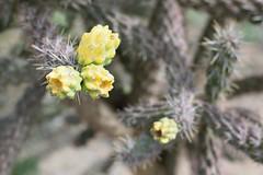 DSC_0292_1383 (thokaty) Tags: petrifiedforest nationalpark arizona petrifiedwood roadtrip holbrook