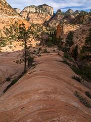 Zion Zen (xjblue) Tags: 2017 cactushugger hurricane mtb stgeorge utah landscape race scenic trip zionnationalpark southernutah sandstone zion hike desert canyon