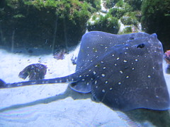 00734936 Aquarium Berlin 1 - 2017 (golli43) Tags: aquariumberlin zoo fische krokodile quallen wasser wasserpflanzen amphibien insekten unterwasserwelt