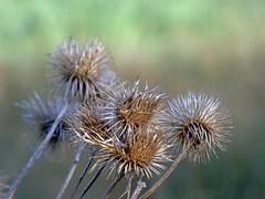 Spring 5 (pocahontas1975) Tags: framlingham spring flowers flores england suffolk sun woodwork mere castle landscape tree