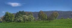 Frühling (Blende2,8) Tags: wolke himmel wiesen bäume streuobstwiesen schwäbischalb schwaben reutlingen glems