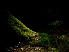 Where the dwarfs live / Wo die Zwerge leben (Caledoniafan (Astrid)) Tags: lowkey caledoniafan nikon nikoncoolpixl820 forest wald moss moos licht light nature natur landscape landschaft spring frühling
