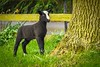black & white lamb (Snapdragon Lincs) Tags: l lincolnshire life lambs sheep cute warble tree peeing brave inquisitive nosey field outdoors alone
