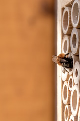 Hold Tight! (CJH Natural Photography) Tags: bee hold holdon tight house nest insect virticle garden garten