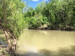 San Antonio River_1442 (gosdin) Tags: tceq swqm sampling bacteria 303d