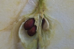 seeds in apple- HMM (Denis Vandewalle) Tags: pépins graines seeds hmm macromondays macro pomme apple macrophoto pentaxk5 tamron