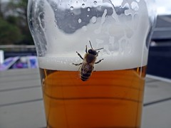 Bee(r) (Bricheno) Tags: arran lamlash pierhead pierheadtavern pub inn tavern taverna bricheno isleofarran scotlandinminiature scotland escocia schottland écosse scozia escòcia szkocja scoția 蘇格蘭 स्कॉटलैंड σκωτία pht insect pint beer macro