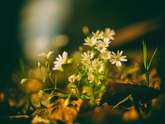 Track side (HetSpul) Tags: nature plant flower outdoors springtime summer greencolor leaf yellow closeup grass beautyinnature season meadow freshness growth macro sunlight nopeople wildflower everypixel