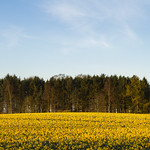 Spring fields in Scotland. thumbnail