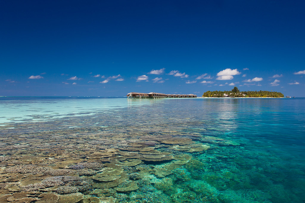 Beach & House Reef