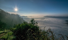 My love II (Vagabundina) Tags: mountain volcano nature fog mist morning tree sunrise grass sun sky weather green blue mystical bromo java indonesia asia eastasia nikon nikond5300 dsrl