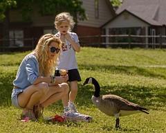 Goose Talk (brev99) Tags: topazdetail topazdenoise nikviveza mother daugher goose canadiangoose tulsa d610 tamron70300vc