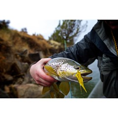 Clean water and water temps in the low 40s means it's time to get down low and pull some meat. @scottflyrods @gordyandsons @airflousa @simmsfishing #northplatte #flyfishing #browntrout #streamereater #fishwyoming
