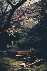 2017076 (gwagwa) Tags: sakura cherry japan pink tree woman japanese blossom spring 55mm f18 street park