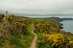 DSC_0214 (shieladixon) Tags: walking nature unspoiled coast bluesky wales coastal path welsh