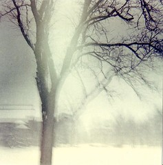 Oberlin II (Grace B. H.) Tags: park trees winter ohio snow building tree 120 film architecture square lomo lomography snowy 120film diana dianaf wintertrees oberlin sciencecenter wintertree northeastohio oberlincollege tappansquare ohiowinter oberlinwinter oberlinsciencecenter