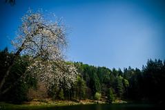 Lago di Meugliano-13 aprile 2014-016.jpg (sk0o) Tags: torino lago luca era di aprile 13 provincia domenica 2014 glaciale meugliano morenico lucaschinetti schinetti