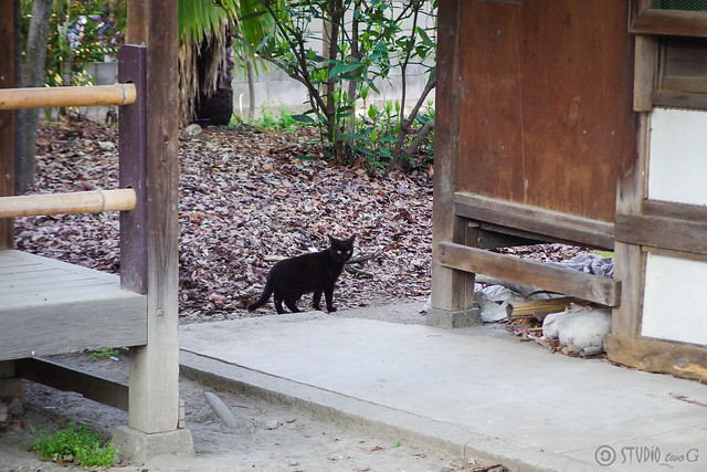 Today's Cat@2014-04-18