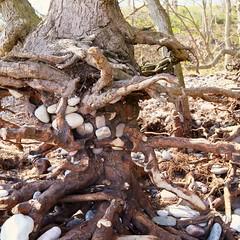 nature has its own art (Cecilia Adolfsson) Tags: tree art nature beauty canon is skne sweden stones cecilia usm ef sterlen f4l 24105mm canonef24105mmf4lisusm adolfsson mattebox mattebox:mbx=w5431e49s63g62c1l0d0099a9e5eeffffx0000737effffz0500ffff mattebox:uuid=435d611c467c494783d0187ee5437d6d