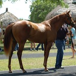 OBS Two Year Old Sale '14 thumbnail