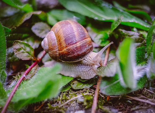 Snail by mripp, on Flickr