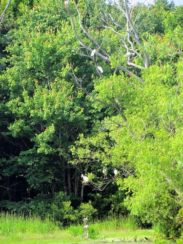 48 Trees Harkers Island NC 9825