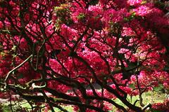 Japanse tuin (Gerard Stolk (vers l'Ascension)) Tags: denhaag haag thehague lahaye japansetuin clingendaal