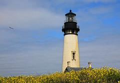 Yaquina Head Lighthouse (Team Hymas) Tags: lighthouse oregon coast head pacificocean area yaquina natureal