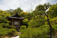 20140518-030-Grounds of Okochi Sanso mansion.jpg (Roger T Wong) Tags: travel japan garden kyoto arashiyama mansion 2014 okochisanso canon24105f4lis canonef24105mmf4lisusm sonyalpha7 sonya7 rogertwong