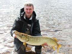 13lb Pike (salmoferox) Tags: fish scotland fishing highland loch pike predator cr lure pikefishing catchandrelease catchrelease lurefishing deadbait deadbaiting fishinginscotland