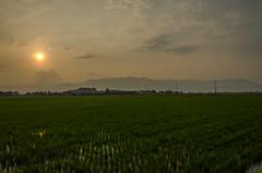 Hira mountains and rice fields, Shiga /  (Kaoru Honda) Tags: sunset mountain nature japan trekking landscape japanese evening nikon outdoor hiking mountainclimbing mountaineering       shiga mountaintrail hira   lakebiwa      d7000
