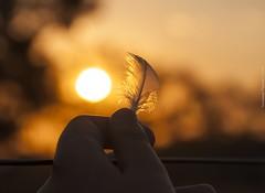 """Enquanto houver sol, ainda haver..."" (Vanessa Patussi) Tags: sol cores iso200 pena f8 11000 momentomgico 18105mm horamgica nikond90 apreciandoofimdodia"