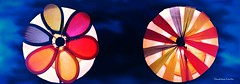 Windmill Flower and wheel (Rainbow colored) (ChandrahaasCreation) Tags: lighting camera blue light 2 two sky flower color colors beauty look wheel contrast digital dark circle lens toy lights design leaf cool rainbow colorful different close bright wind cannon dslr wilndmill nevyblue