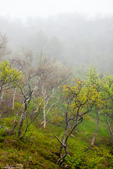 Foggy forest (sandnesj) Tags: trees nature norway fog forest canon 50mm woods foggy northern