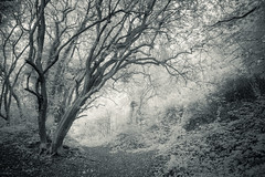 Moushold Heath 31/10/16 (Matthew Dartford) Tags: infraredphotography bw norwich bokeh forest happisburgh heath infrared ir mono monochrome mousehold mouseholdheath norfolk tree wood woodland
