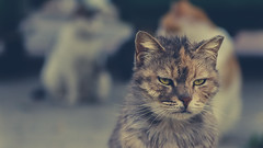 Sad Cat (Alex pozhydaev) Tags: cats cat animals animal photography street yay funny smile