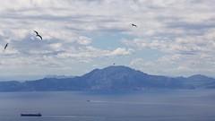 Jebel Musa from Gibraltar (José Rambaud) Tags: djebelmusa djebel djbel jebelmusa jbelmusa yebelmusa adrarmusa musa rifrange marruecos morocco maroc straitofgibraltar estrechodegibraltar rif jebel jbel yebel montañas mountains landscape paisaje paysage paisagem seascape sea mediterraneo mediterranean