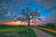 _U1H9801 Tam Giang,Bac Ninh,0317 (HUONGBEO PHOTO) Tags: sigma1224mmf4556 canoneos1dsmarkiii hoagạotamgiang chụpphơisáng mùahoagạo ngãbaxà bắcninh yênphong tamgiang outdoor vietnamscenery red bluesky sky longexposure colorful clouds sunset tree scenery