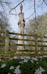 Yorkshire Sculpture Park (Simon Caunt) Tags: artscouncilengland ysp oneandother carpet springflowers barnsley spring woodanemones body man rust steel sculptor stump gormley nikond800 d800 nikoncameras afsnikkor2470mmf28 yorkshire sculpture park yorkshiresculpturepark antonygormley