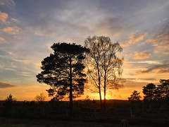 Woolmer Sunset - 19:26 (Marc Sayce) Tags: woolmer ranges forest conford whitehill longmoor south downs national park hampshire sunset sundown trees april spring 2017